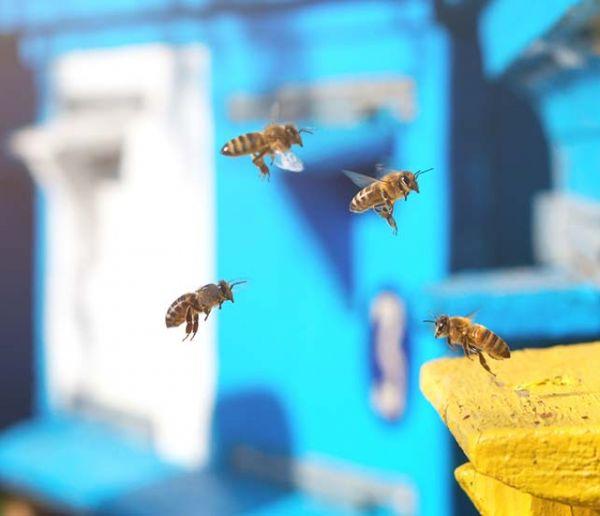 Bee saving paper le papier jeter au sol pour sauver les abeilles - Avoir une ruche dans son jardin ...