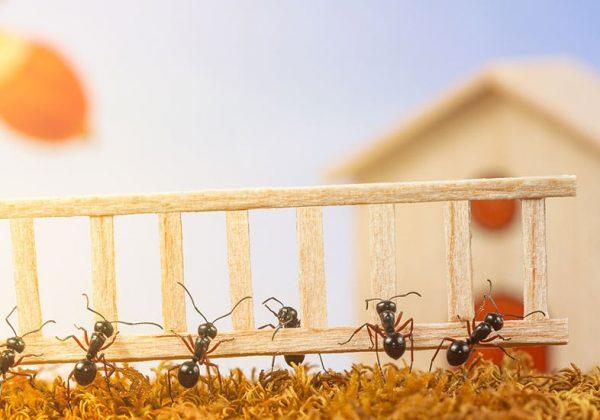 Comment Se Debarrasser Des Fourmis Sans Insecticide 12 Solutions