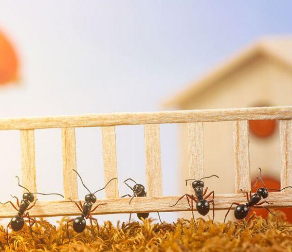 11 méthodes naturelles pour vous débarrasser des fourmis sans les tuer