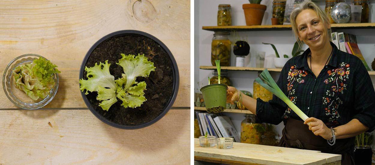 Tuto : Faites pousser vos légumes à l'infini