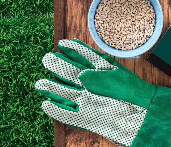 Réussir son potager en permaculture