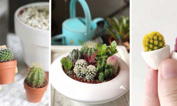 20 photos de mini-cactus pour adopter la nouvelle micro-tendance qui pique