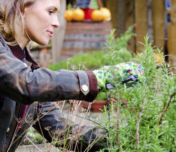 Débuter son potager en permaculture en 6 étapes
