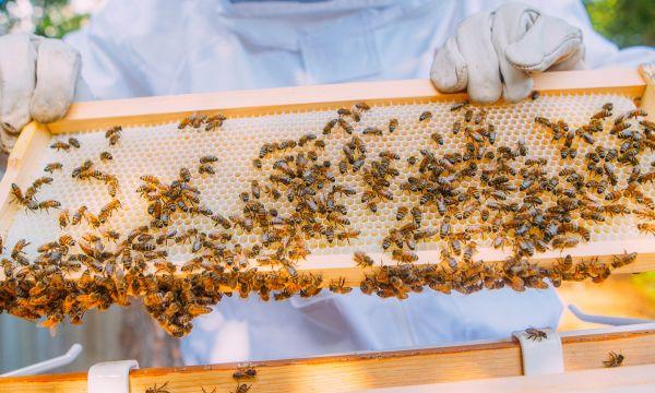 Des français créent un boîtier connecté pour sauver les abeilles de l'extinction