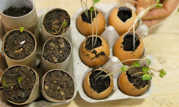 Tuto : Faites vos semis dans des rouleaux de papier toilette et des coquilles d'œufs