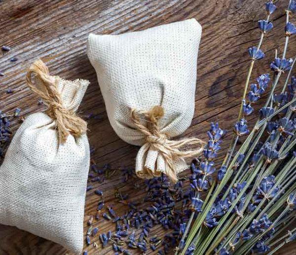 16 solutions naturelles pour vous débarrasser des mites vestimentaires