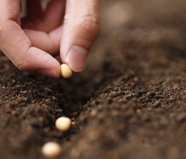 Tuto : Comment récolter vos propres graines et les conserver jusqu'à l'année prochaine ?