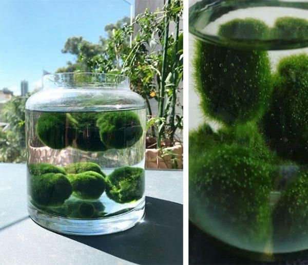 vivre-avec-un-aquarium