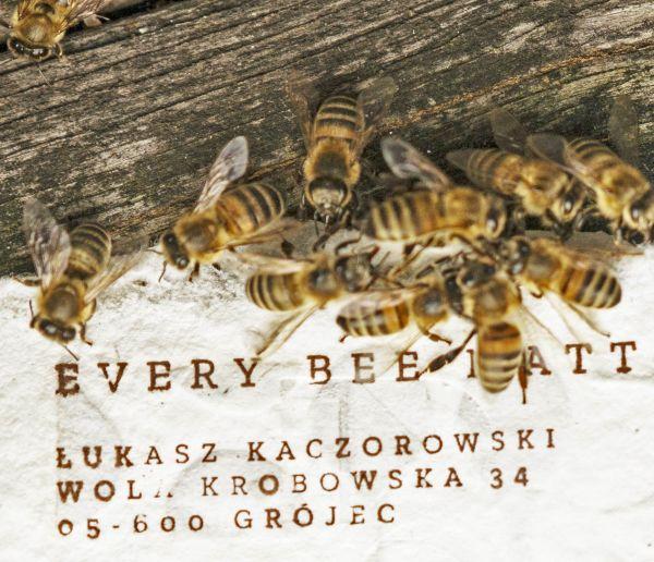 Vous voulez aider les abeilles ? Jetez ce papier dans votre jardin !