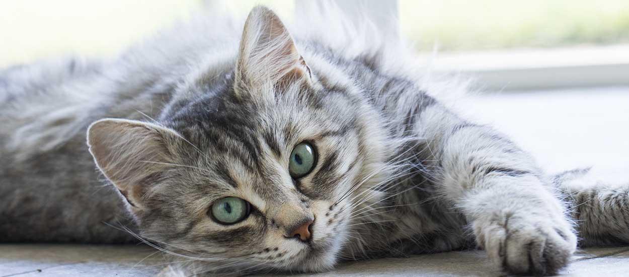 enlever les odeurs d 39 urine de chat avec des ingr dients colos. Black Bedroom Furniture Sets. Home Design Ideas