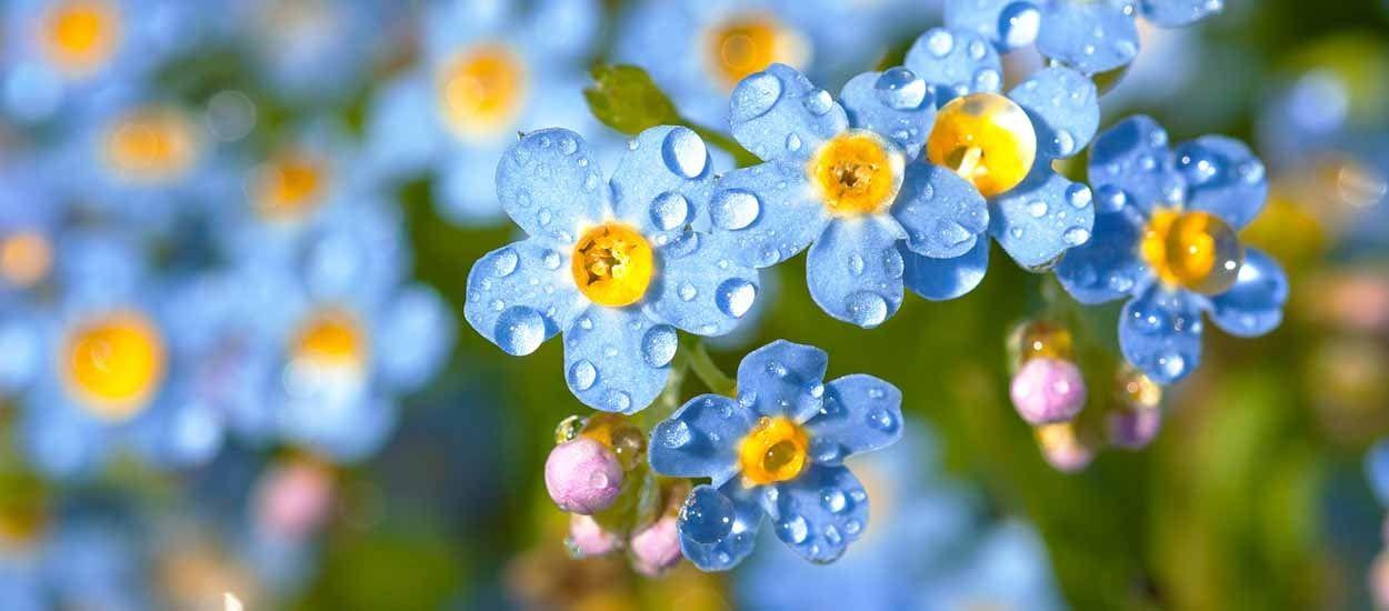 Que faire au jardin et au potager après la pluie ?