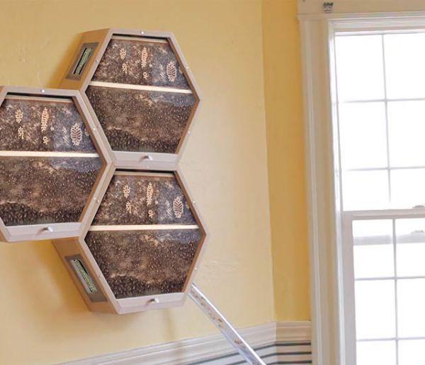 Installez des abeilles dans votre salon pour les observer en toute sécurité et récoltez leur miel !