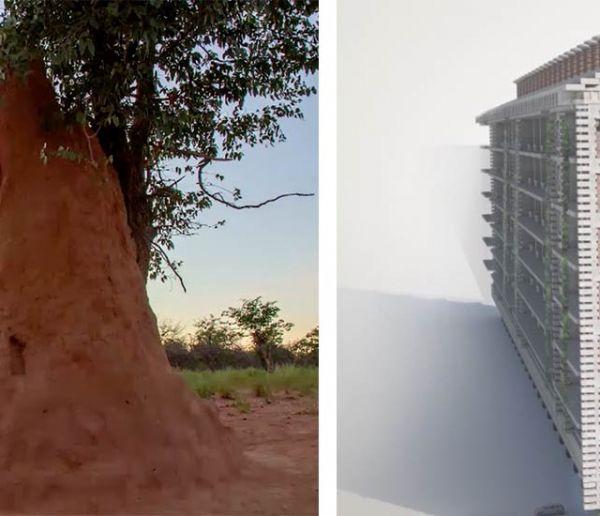Cet immeuble s'inspire des prouesses des termites pour se passer de clim'