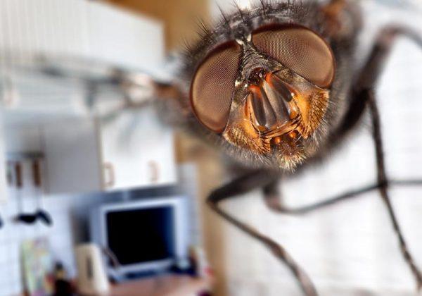 quelques astuces naturelles pour repousser les mouches en été