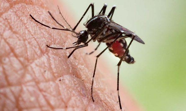 Insolite : Pour lutter contre les moustiques un maire les interdit dans sa commune