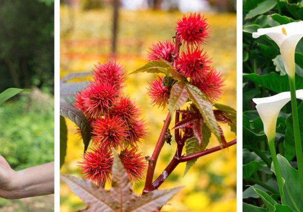 Attention à ces plantes toxiques mortelles qui se trouvent ...