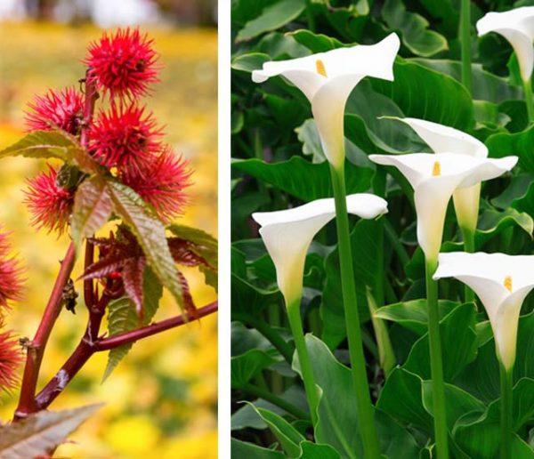 9 plantes de votre jardin qu'il ne faut surtout pas manger !