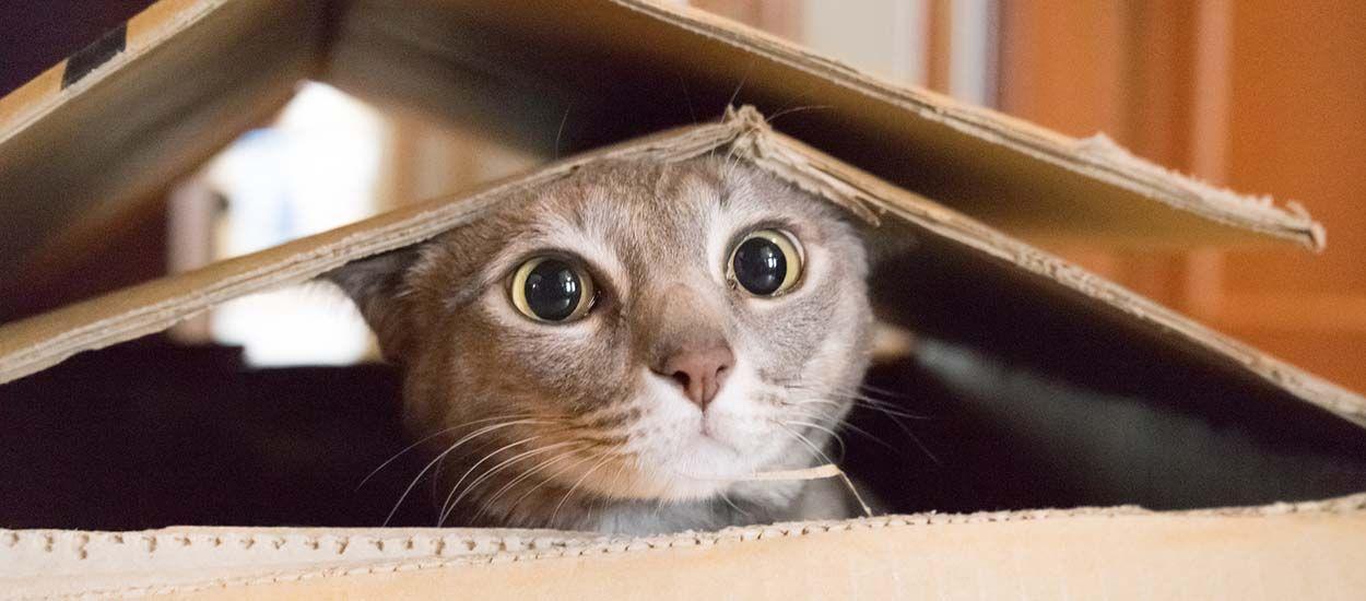 Comment déménager avec votre chat sans le stresser ?