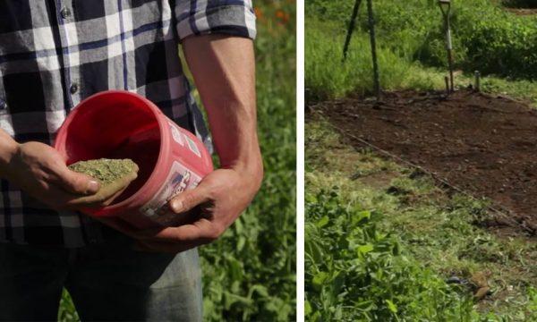 Voici comment utiliser votre compost dans votre jardin et amender vos plantations