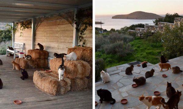 Garder 55 chats sur une île paradisiaque : postulez au job de vos rêves !