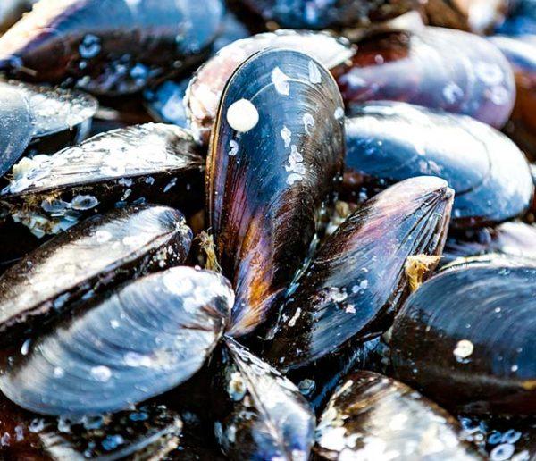Les moules de la Braderie de Lille seront recyclées en carrelage !