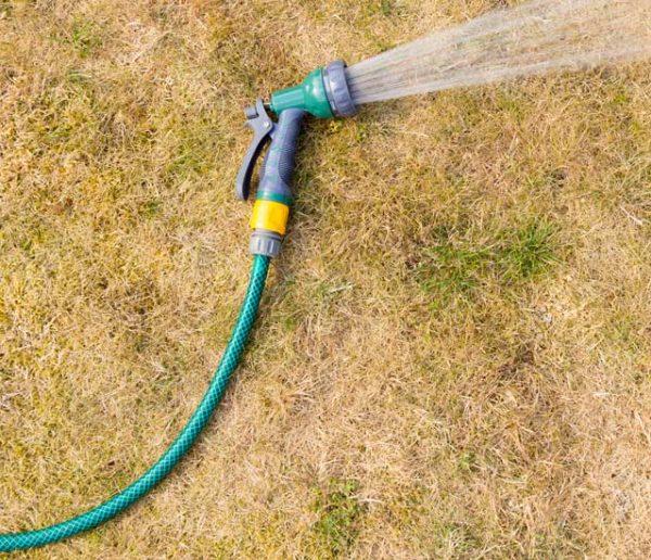 Comment soigner son jardin après un épisode de canicule ?