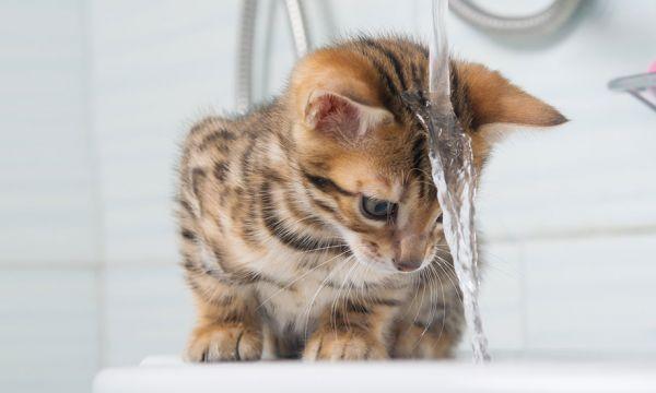 Faut-il se doucher le matin ou le soir ? Les arguments scientifiques pour trancher !