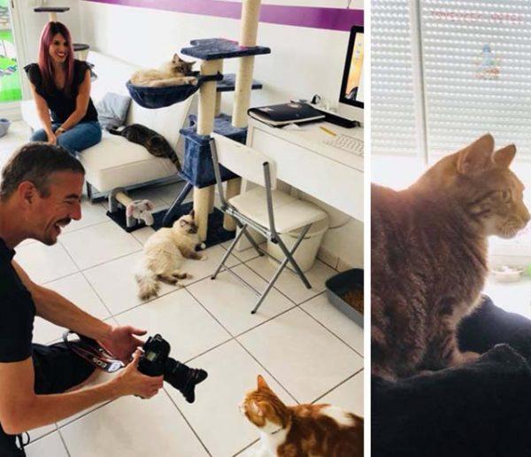 Ce couple a changé de vie et transformé son appartement en pension pour chats