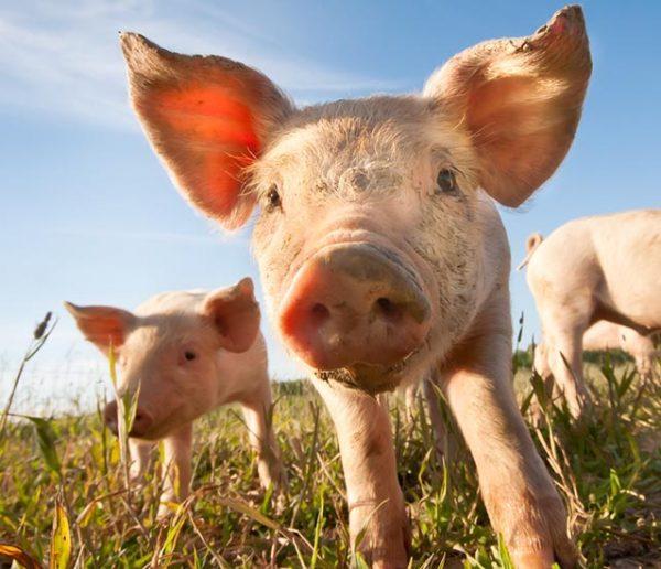 Saviez-vous que l'électricité provient aussi de l'élevage ? Un fournisseur invente une certification vegan