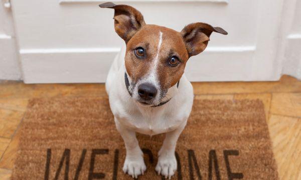 Une entreprise construit un immeuble uniquement réservé aux propriétaires de chiens