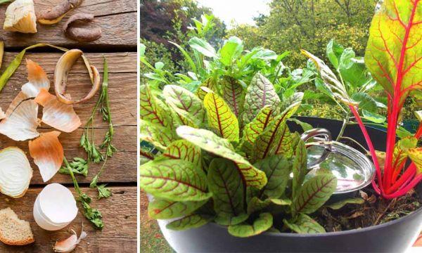 Faites pousser vos légumes directement dans ce mini-composteur