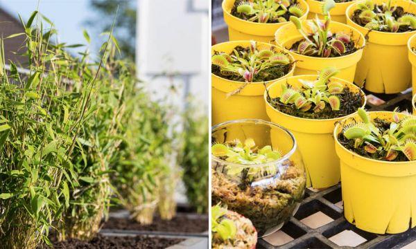 7 plantes qui ne mourront jamais si vous les arrosez trop