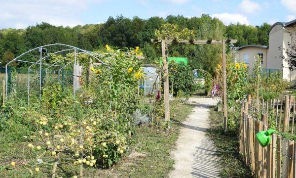 Jardin thérapeutique : et si l'on soignait Alzheimer en plantant des tomates ?