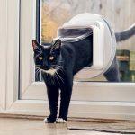 Comment Securiser Vos Fenetres Pour Que Votre Chat Ne Tombe Pas