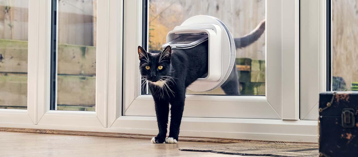 Cette chatière connectée empêche le chat du voisin d'entrer chez vous !