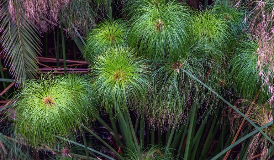 Plante Exterieur Qui Aime L Eau