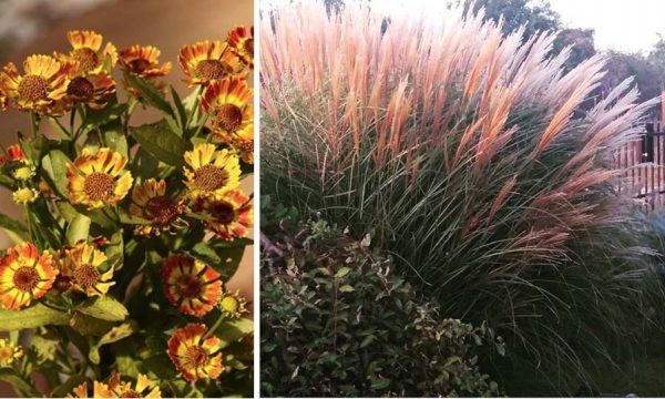 12 plantes pour apporter de la couleur à votre jardin d'automne