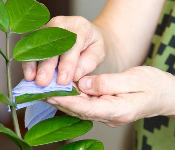10 astuces de grand-mère pour soigner et fortifier vos plantes d'intérieur
