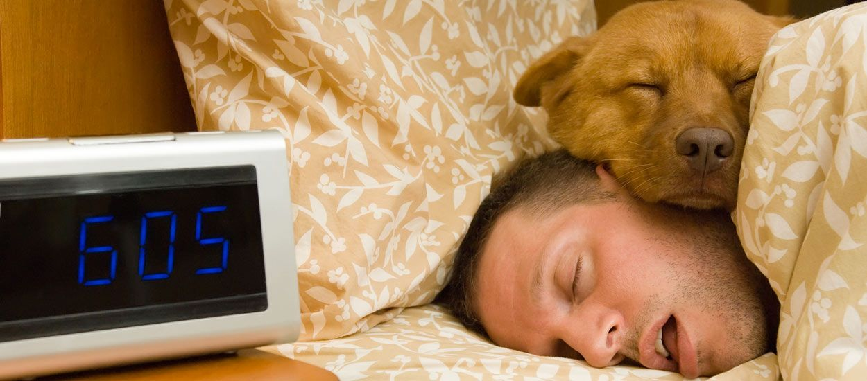 Vous voulez dormir avec votre animal ? Voici 5 conseils pratiques pour une nuit sans encombre