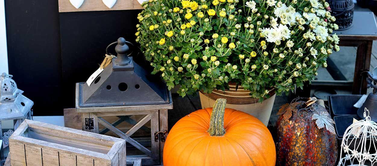 10 fleurs et graminées à planter sur votre balcon pour de jolies couleurs d'automne