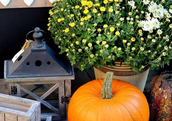Quelles Fleurs Et Graminees Planter Sur Le Balcon En Automne