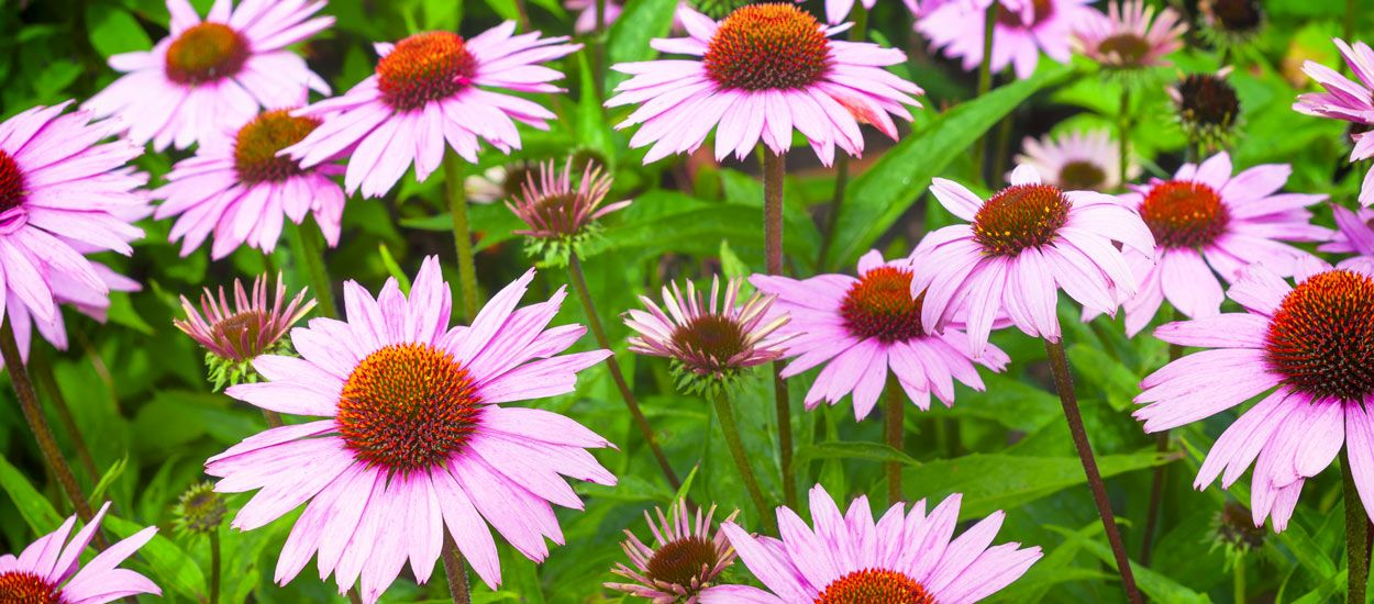 4 plantes du jardin à consommer immédiatement pour préparer son corps à l'hiver !