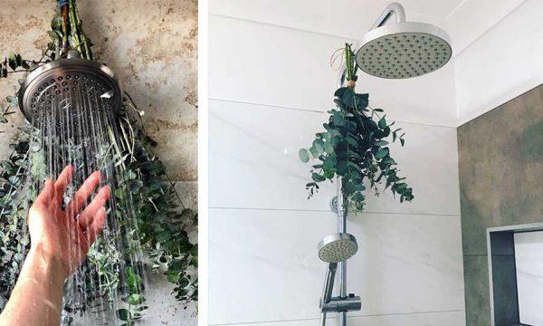 Pourquoi accrocher de l'eucalyptus dans sa douche est une bonne idée ?