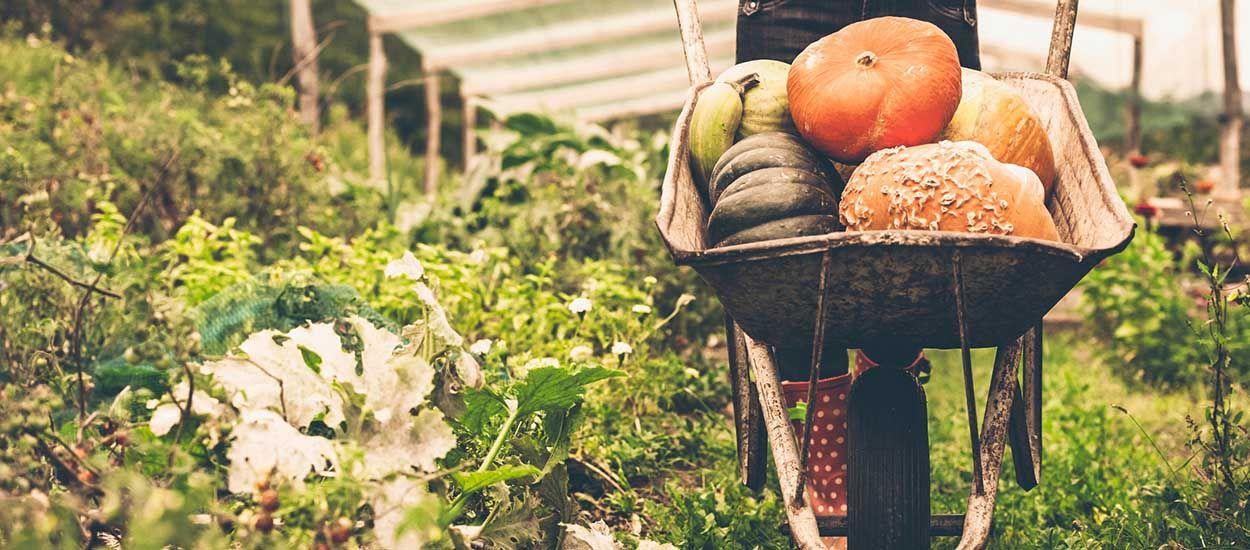 Comment aménager son potager pour devenir autosuffisant en légumes toute l'année ?