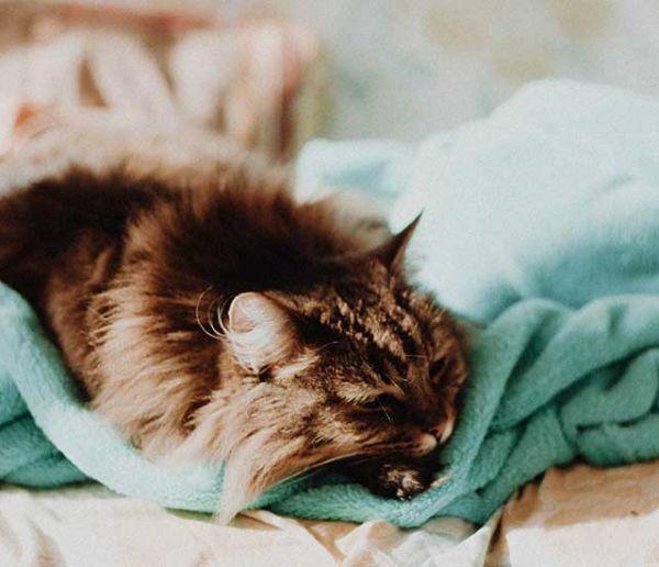 Le pouvoir magique des couvertures douces : pourquoi rendent-elles heureux ?