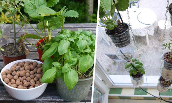 Tuto : fabriquez votre propre ferme de fenêtre pour cultiver, même sans jardin !
