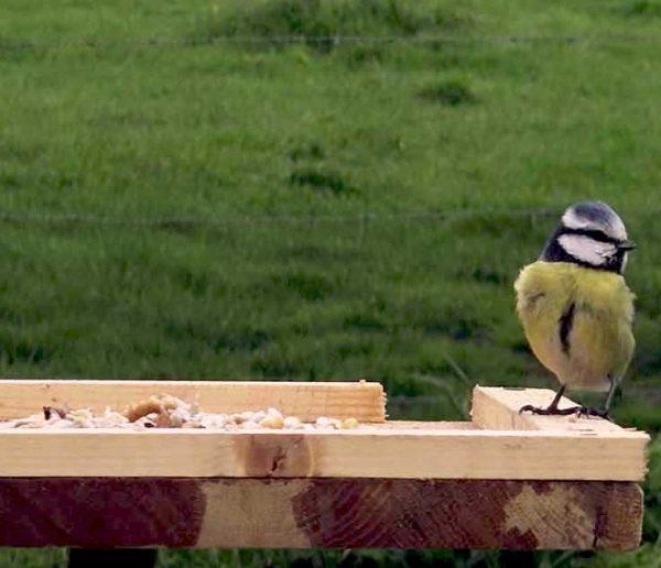 Tuto : Fabriquez une mangeoire à oiseaux pour les nourrir cet hiver