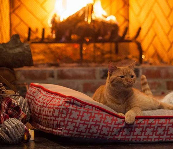 Choisissez la vidéo de feu de cheminée qui vous détendra et vous réconfortera