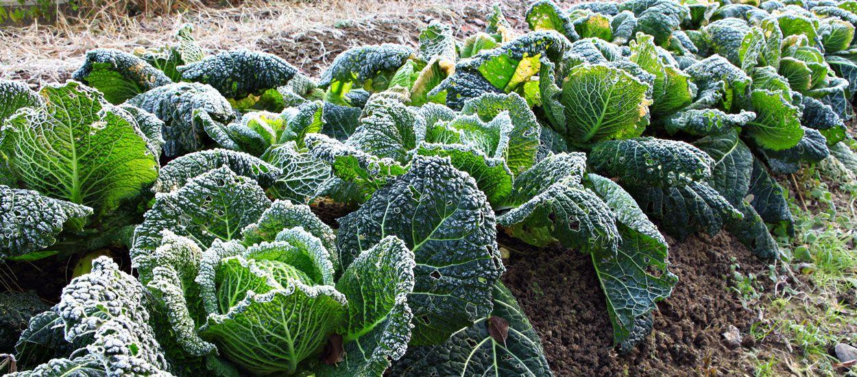 Préparez en douceur votre jardin à l'hiver et au froid avec la permaculture