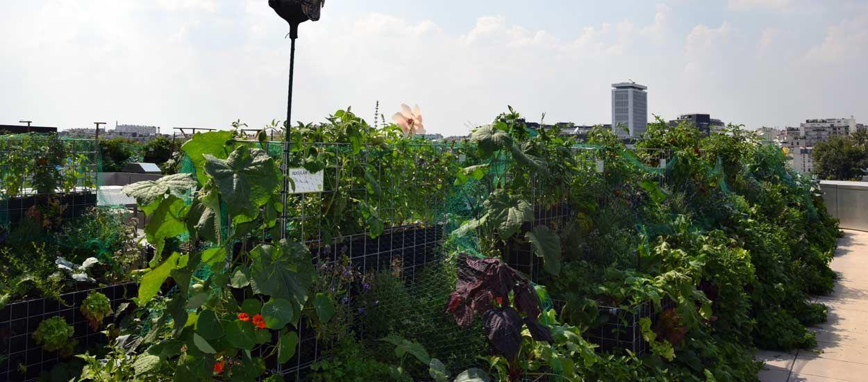Un potager partagé sur les toits de Paris, une nouvelle façon de jardiner ensemble